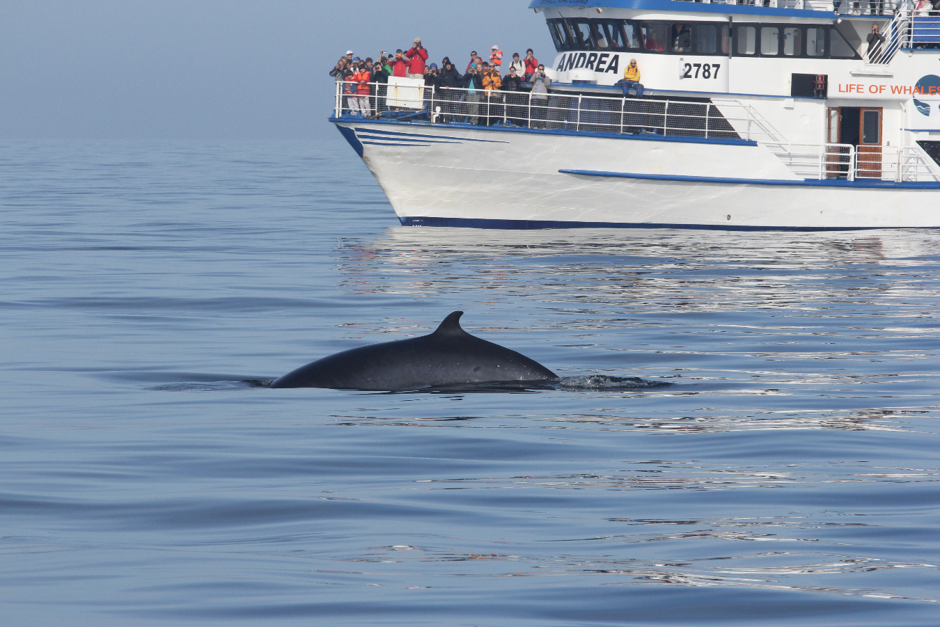 Whale Watching Tour From Reykjav 237 K Guide To Iceland