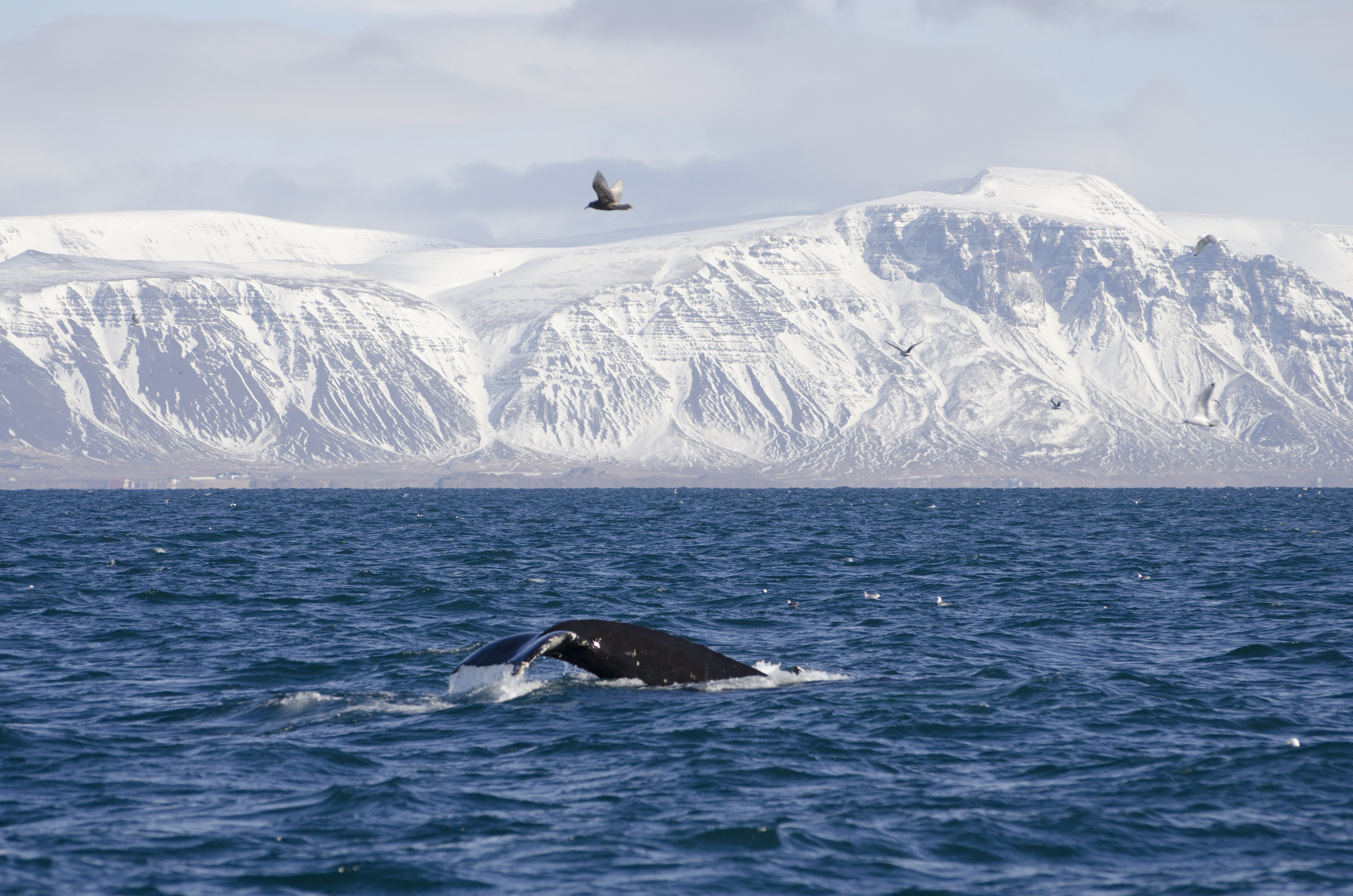 How to Go Whale Watching in Winter
