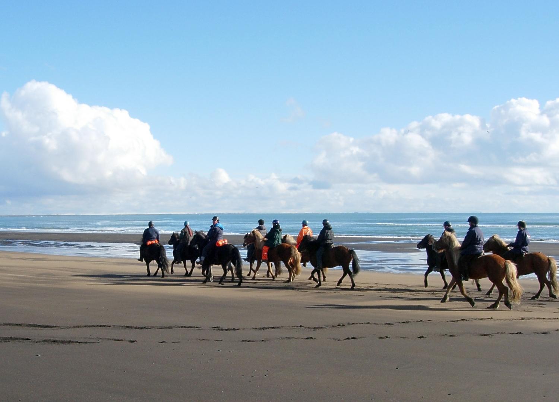 Back Beach Horse Tours