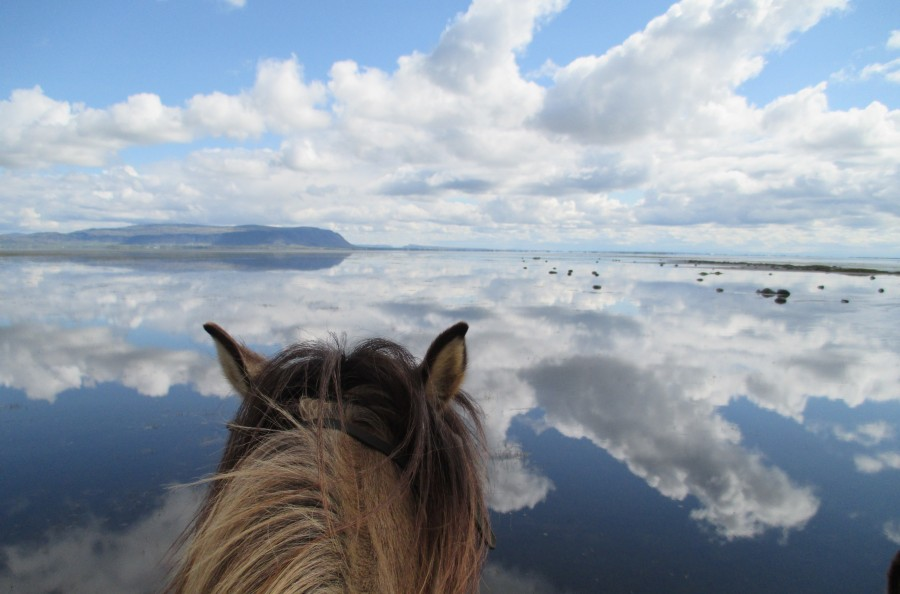 Horse riding on a beautiful beach day tour guide to iceland witness icelands dramatic coastline from horseback publicscrutiny Gallery