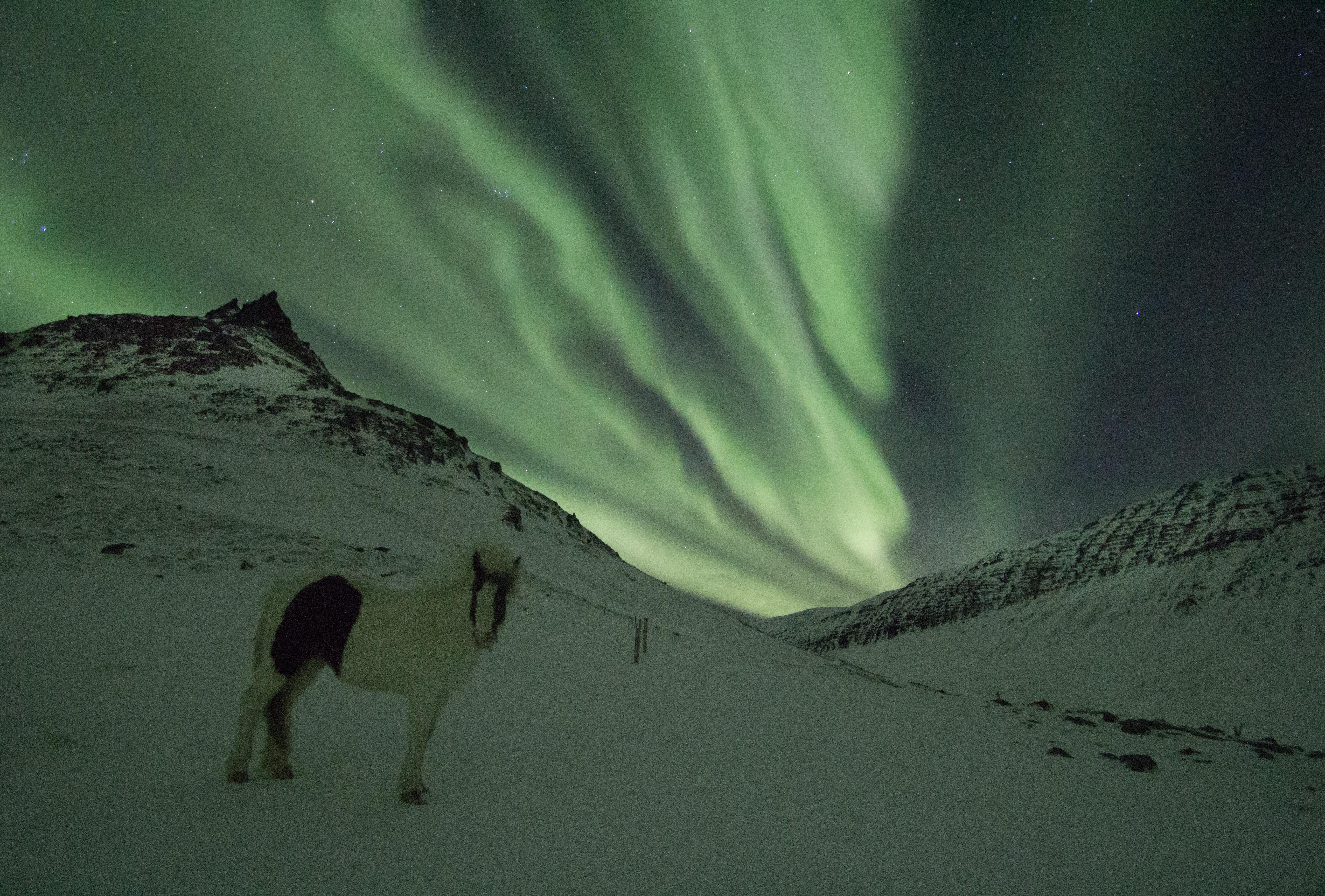 westfjords iceland northern lights - photo #23