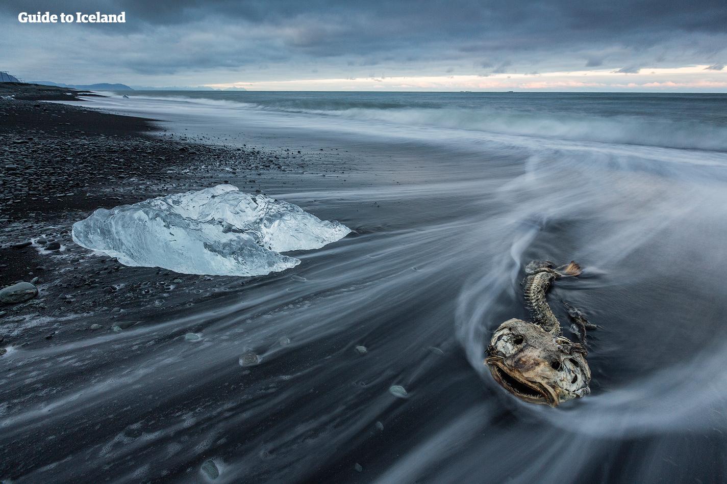 Die Gletscherlagune Jökulsárlón | Guide to Iceland