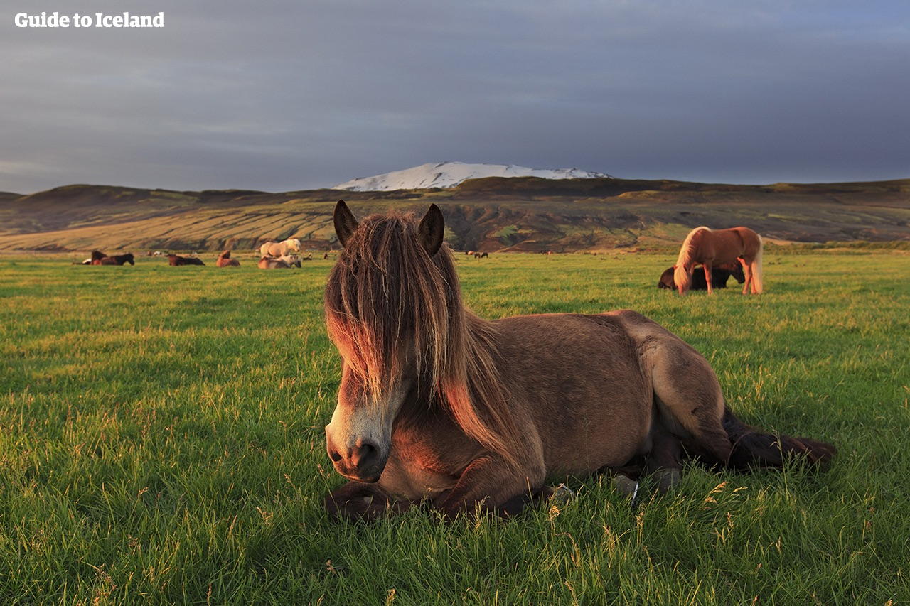 It Is A Commonly Held Belief In Iceland, That You Should Never Ride A Horse  Whose Name You Donu0027t Know Or Understand. So Before Embarking On A Horse  Riding ...