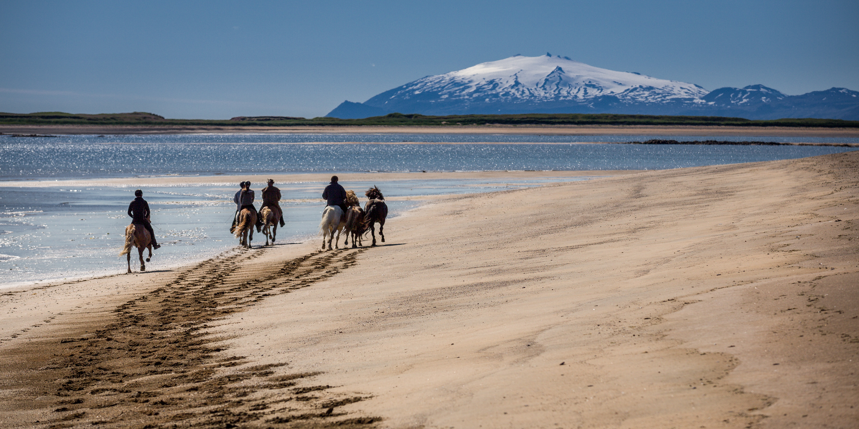 the icelandic horse in the home country