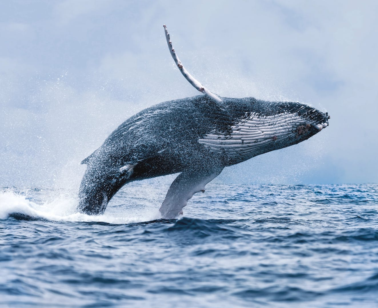 whale watching in iceland guide to iceland
