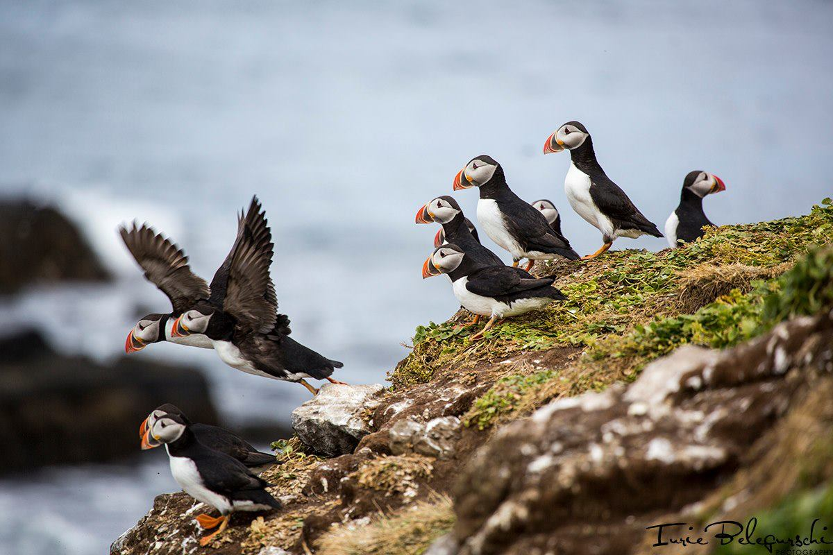 Time Visit Puffin Island