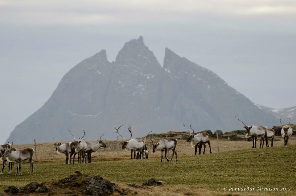 Best Attractions by the Ring Road of Iceland | Guide to Iceland
